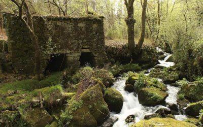 La Sociedad Visita Galicia con la Convención Anual del Grupo CYBAS